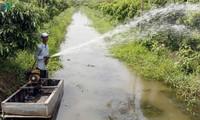Bauern in der Gemeinde Truong Thanh helfen einander beim Obstanbau