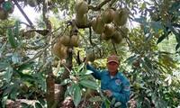 Entwicklung des Modells über Anbau von Obstsorten in Kaffee-Gärten zur Anpassung an Klimawandel