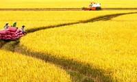 Vietnam bemüht sich, im Jahr 2030, eines der 15 Länder mit der weltweit entwickelsten Landwirtschaft zu werden