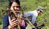"""Bergkreise der Provinz Quang Nam fördern das Programm """"Jede Gemeinde, ein Produkt"""""""