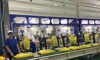 Vorschriften bezüglich der Zertifikate von exportiertem Duftreis in die EU gewährleisten
