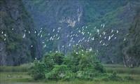 Vietnam setzt Aktivitäten zur Erhaltung und nachhaltigen Nutzung von Feuchtgebieten um