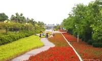 """Blumenfest """"Tanz des Meeres und der Blumen"""" startet die Sommertourismus-Saison 2021 in Sam Son"""