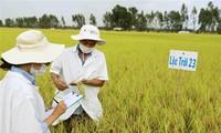 Aufbau und Entwicklung der Marke für Spezialitäten im Mekong-Delta