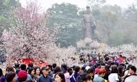 하노이 – 일본 벚꽃축제