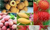베트남 농산물 시장의 다양화