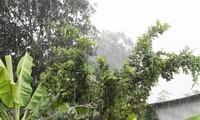 메콩 삼각주, 가뭄에 단비 내리다
