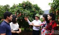 베트남 리치, 전세계의 많은 지역과 국가에 출시