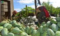 베트남 농민, 세계 각국에 대한 농산물 수출에 대해 기쁘게 생각