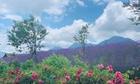 """베트남 기네스,""""베트남의 가장 큰 장미 계곡""""이라는 칭호"""