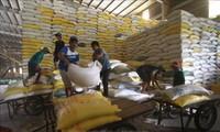 6개월간, 쌀 수출 약 18% 증가