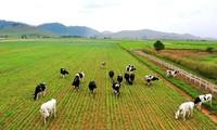 베트남, 지속가능한 목축업 개발과 기후변화 적응 지향