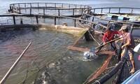 바리어-붕따우의 수산양식 발전