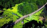 안장성 짜스 티트리 숲의 아름다움