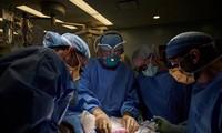 최초로 사람에 돼지 신장 이식