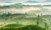 Fotografer Vietnam Berprestasi dalam Kontes Fotografi Internasional