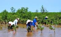 世界银行帮助越南应对气候变化和实现绿色增长
