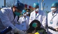 国际社会努力遏制新冠肺炎疫情