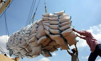 越南有望成为世界领先的大米出口国