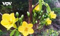 春天攀登圣峰 观赏安子金梅花
