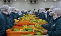 对多个主要市场的水果和蔬菜出口增长强劲