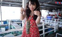 平巴岛特产龙虾