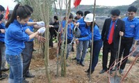 Tree planting festival begins in many provinces