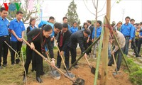 Tree planting festivals launched nationwide