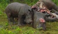 Vietnam, South Africa strengthen cooperation in bio diversity preservation