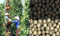 Pepper export to record 1 billion USD in 2014