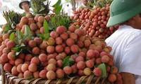 Workshop boosts fresh lychee exports