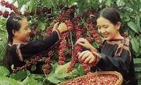 Vietnam Coffee Day