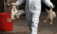 Bird flu spreads around the world