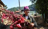 Flower Festival of the Cong in Dien Bien