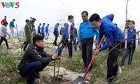 Tree planting campaigns launched to protect the environment