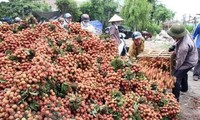 Localities promote litchi trading