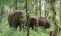 Vietnam will not use wild animals for tourism, circus