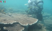 Coral reefs revived on Cham Islands