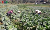 Lai Chau farmers make fortune by specialized agricultural production
