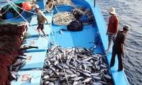 EC acknowledges Vietnam's improvement in combating IUU fishing