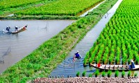 Soc Trang farmers earn high from shrimp-rice farming