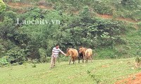 Dao ethnic people in Lao Cai escape poverty thanks to agricultural projects