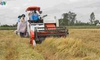 Mekong Delta's key role in national food security