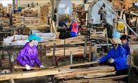 Vietnam's wood export targets 12 billion USD