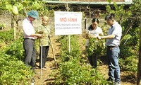 Son La grows medicinal plants sustainably
