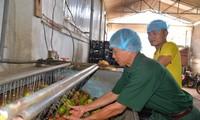 War invalids contribute to Son La province's agricultural, rural economic restructuring