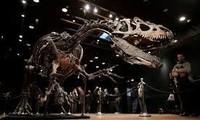 Remains of the day: dinosaur skeleton fetches three million euros