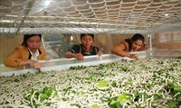 Silkworm industry to promote sustainable development for exports