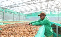 Vietnam's coffee industry must change to integrate internationally