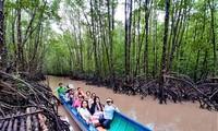 Mangrove trees help farmers in Ca Mau escape poverty